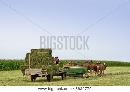 Amish Baling Hay