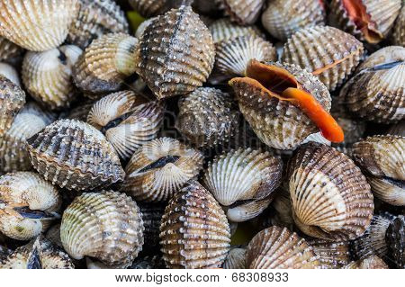 Fresh Shellfish Blood Cockles.