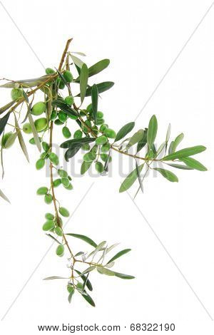 small green iraqi olives on white background