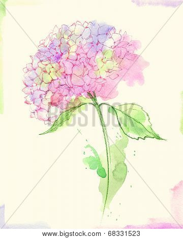 Painted watercolor hydrangea flower