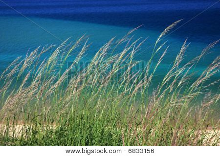 Michigan Dunegrass