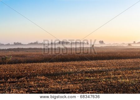 Sunrise over a field in the fog