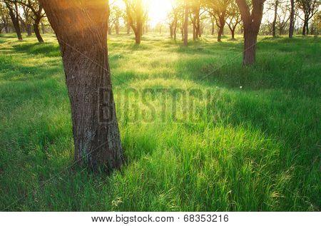 Park sunlight on green grass. Nature composition.