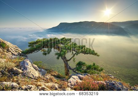 Mountain landscape. Spruce on the edge. Composition of nature.