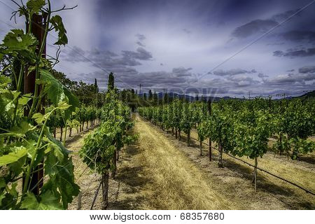 Vineyards of Napa County