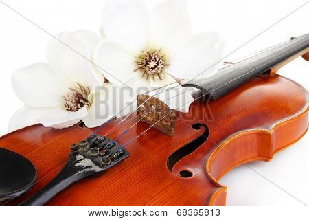 Classical violin with flowers close up