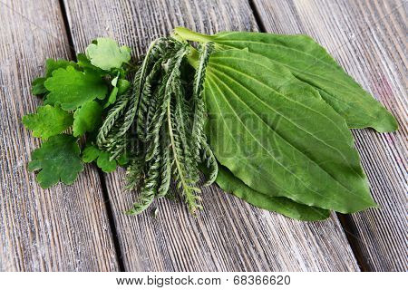 Medicinal herbs on table close-up