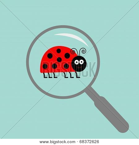 Ladybug ladybird insect under magnifier zoom lense. Flat design.