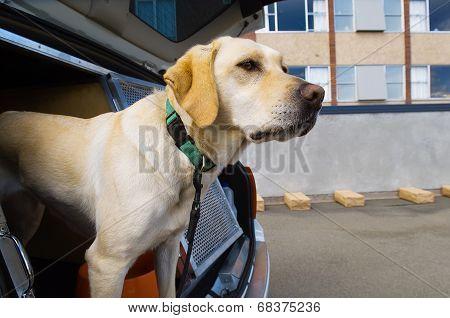 Sniffer Dog