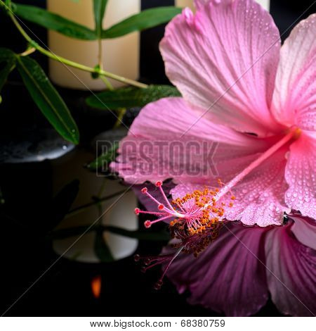 Beautiful Spa Setting Of Delicate Pink Hibiscus, Green Tendril Passionflower, Candles And Zen Stones