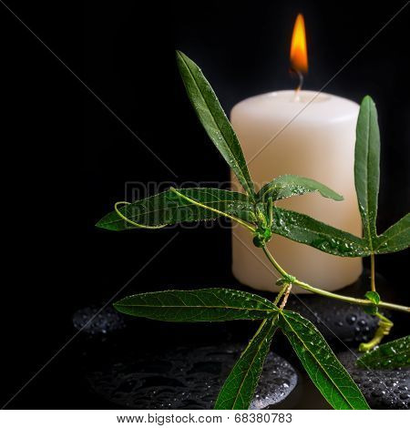 Beautiful Spa Setting Of Green Tendril Passionflower, Candle And Zen Stones With Drops On Reflection