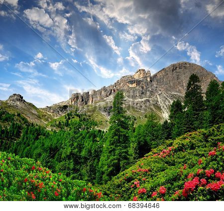 Dolomite peaks, Rosengarten in the sunset,Val di Fassa, Italy Alps