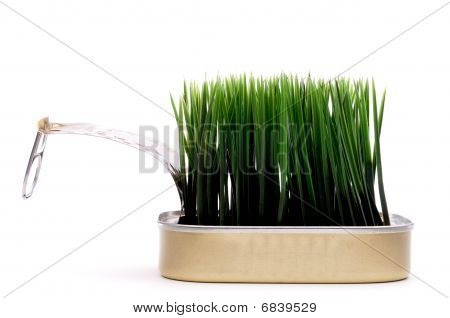 Horizontal Image Green Grass Growing From A Sardine Can On White:recyle