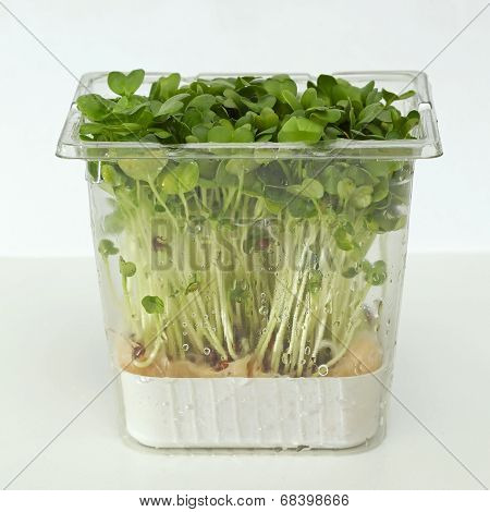 Watercress Box