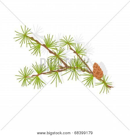 Larch Tamarack Branch Vector