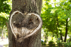 stock photo of cutting trees  - Heart in the bark of a tree.Tree with heart shape. Heart wooden cut texture ** Note: Visible grain at 100%, best at smaller sizes - JPG