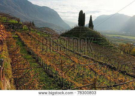 Vineyards of Trentino, Italy, at sunset