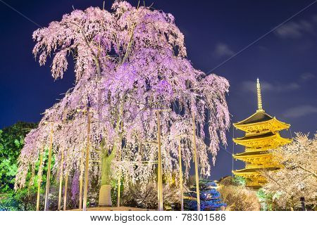 Kyoto, Japan at Toji Pagoda in the spring season.