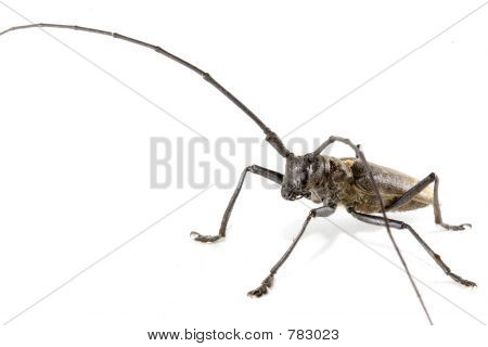 Isolated beetle on white background