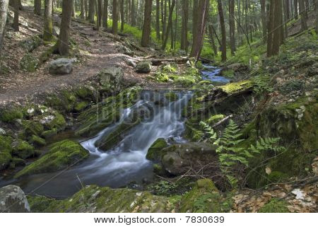 Ferns and Stream