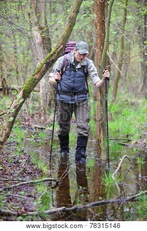 Caucasian male,hiker in the boggy forest walking with poles