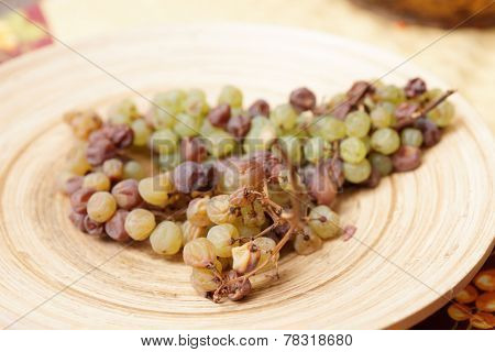 Nosiola grape cluster hit by noble rot botritis cinerea