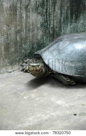 Stunning Turtle