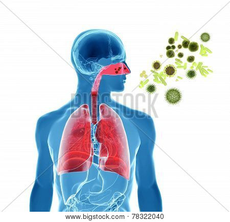 Pollen Allergy / Hay Fever/ Influenza Infection