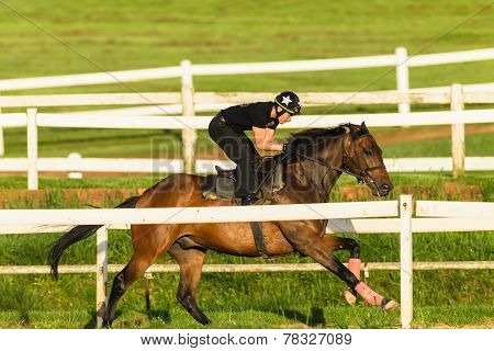 Race Horses Jockeys Training Track