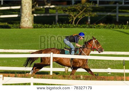 Race Horse Girl Rider Training Track