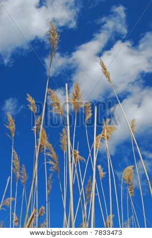 Hierba de agua en el cielo azul