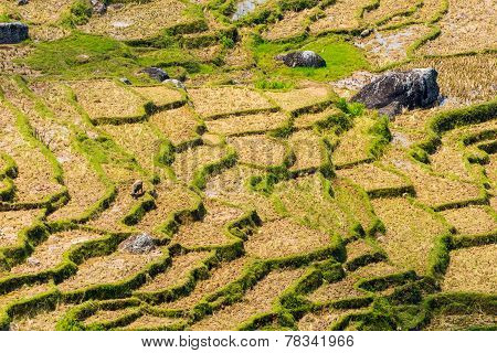 Dry Rice Paddies Pattern
