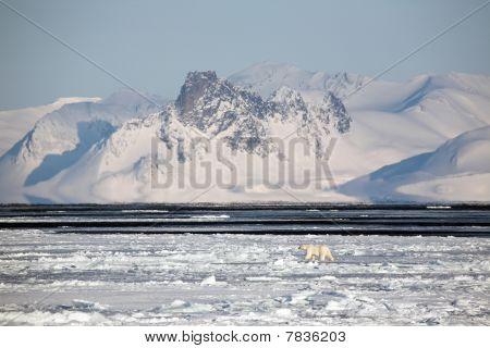 Berg-Landschaft mit Eisbär