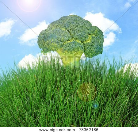 Tree of broccoli.Fantasy landscape