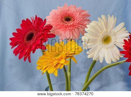 Gerbera Flowers Bouqet