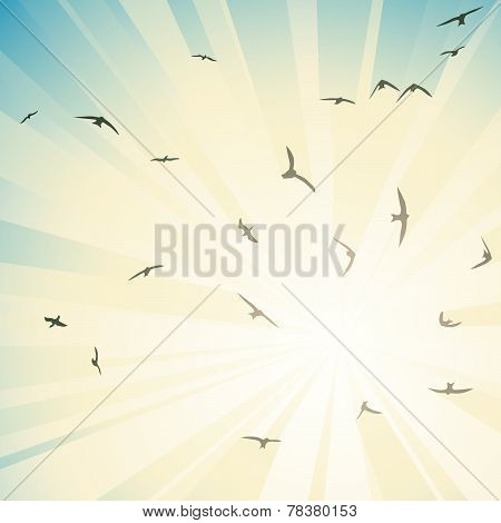 Square Illustration Flock Birds Circling In Rays Of Sun.