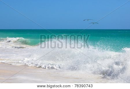 Two pelicans flying over the Atlantic ocean. Cayo Guillermo. Cub
