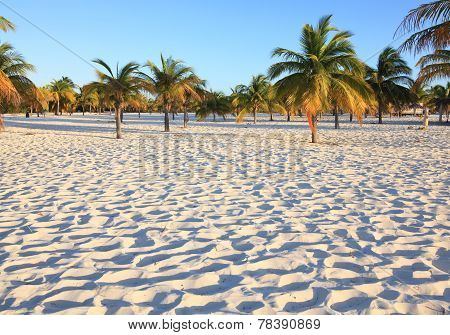 White sand and palm trees. Playa Sirena. Cayo Largo. Cuba.
