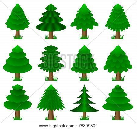 vector conifers, coniferous trees
