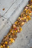 stock photo of accumulative  - Autumn leaves accumulate in an urban curb and gutter - JPG