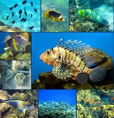 image of butterfly fish  - Red Sea underwater coral fish set - JPG