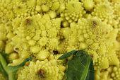 image of romanesco  - Romanesco broccoli - JPG
