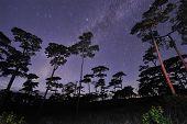 image of boise  - Beautiful night sky full of stars at pine tree forest Phu Soi Dao national park Uttaradit province Thailand - JPG