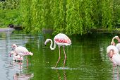 foto of long-legged-birds  - Perfect birds in water outdoors in nature - JPG