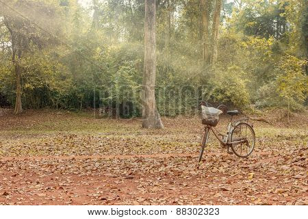 evening sunshine at wooden landscape and a standing bicycle