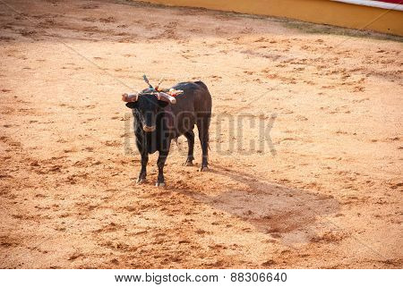 Bull In Bullfight Arena