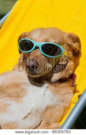 Dog on vacation with sunglasses outdoor in chair