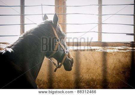 Horse In Stable Box Thinking