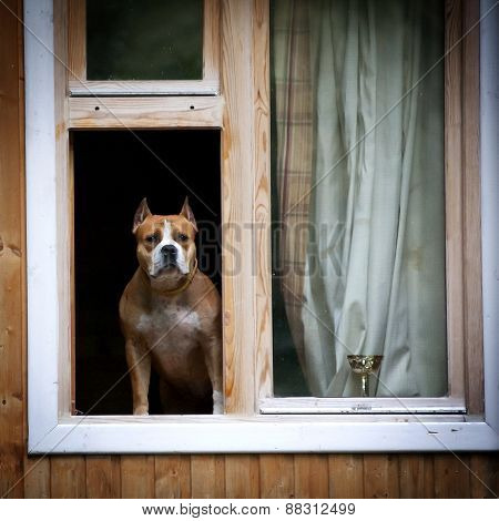 Dog Looking Through Window With Yearning
