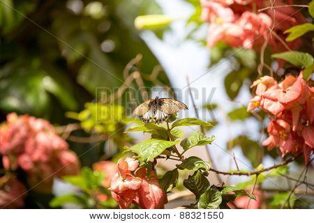 butterfly  fly through flowers in garden